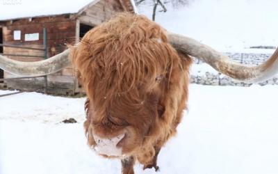 Klas poklonio 1,5 tona hrane za životinje u Pionirskoj dolini